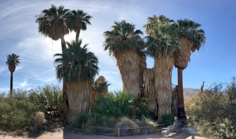 Oasis of Mara in Twentynine Palms