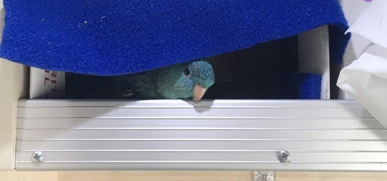 Elmo Playing Peek-a-Boo