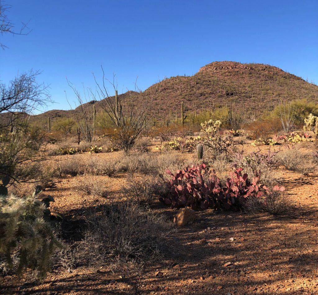 Brown Mountain from the Coatimundi Trail